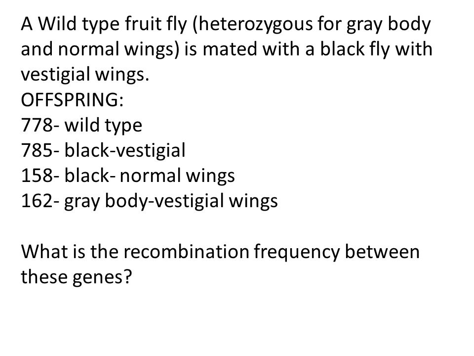 A Wild type fruit fly (heterozygous for gray body and normal wings) is mated with a black fly with vestigial wings.