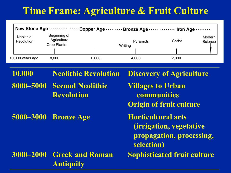 Time Frame: Agriculture & Fruit Culture 10,000Neolithic RevolutionDiscovery of Agriculture 8000–5000Second Neolithic Revolution Villages to Urban comm