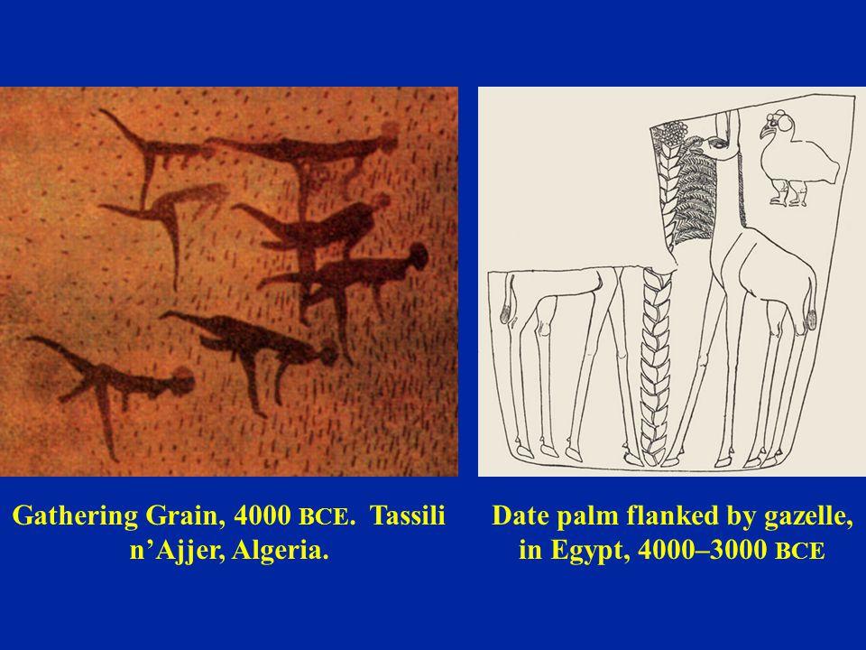 Gathering Grain, 4000 BCE. Tassili n'Ajjer, Algeria. Date palm flanked by gazelle, in Egypt, 4000–3000 BCE