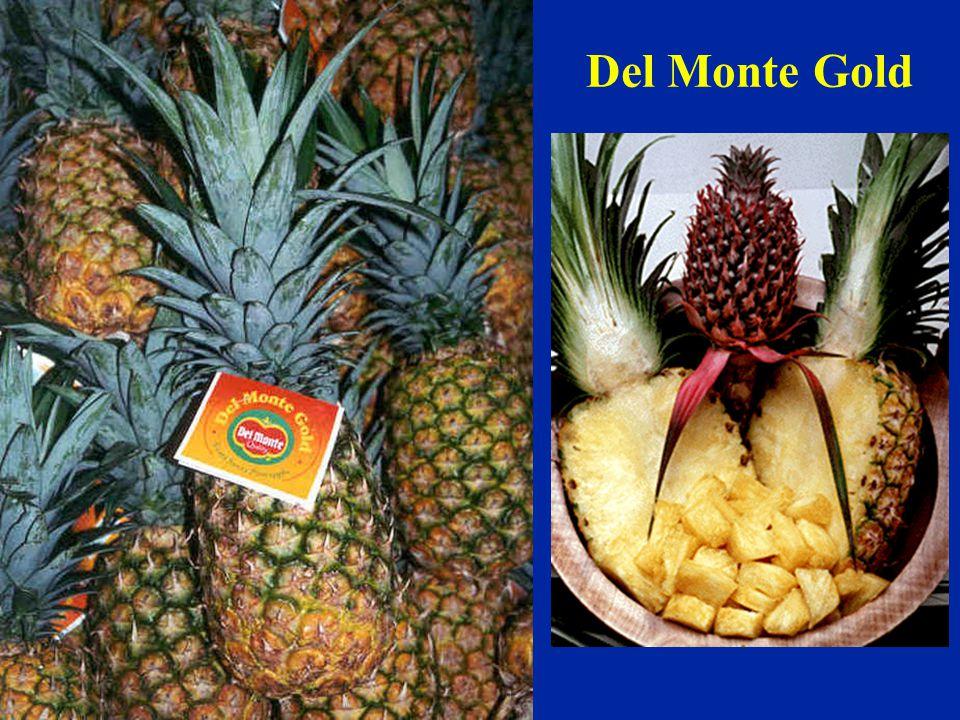 Del Monte Gold