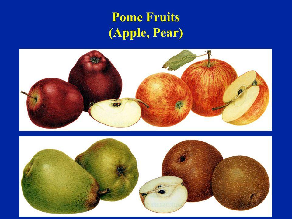 Pome Fruits (Apple, Pear)