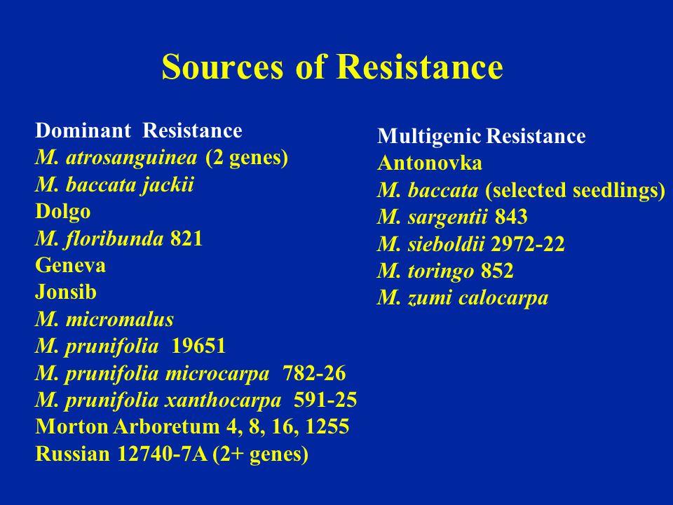 Dominant Resistance M. atrosanguinea (2 genes) M. baccata jackii Dolgo M. floribunda 821 Geneva Jonsib M. micromalus M. prunifolia 19651 M. prunifolia