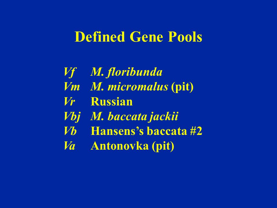 VfM. floribunda VmM. micromalus (pit) VrRussian VbjM. baccata jackii Vb Hansens's baccata #2 VaAntonovka (pit) Defined Gene Pools