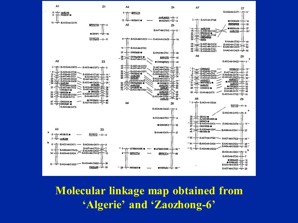Molecular linkage map obtained from 'Algerie' and 'Zaozhong-6'