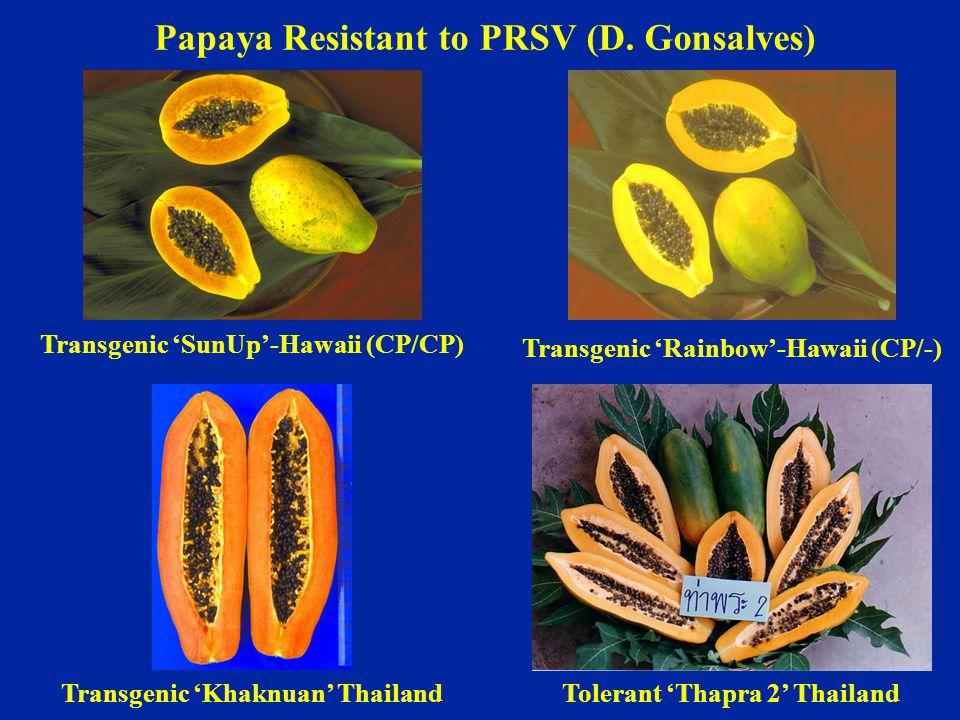 Transgenic 'SunUp'-Hawaii (CP/CP) Transgenic 'Rainbow'-Hawaii (CP/-) Transgenic 'Khaknuan' ThailandTolerant 'Thapra 2' Thailand Papaya Resistant to PR