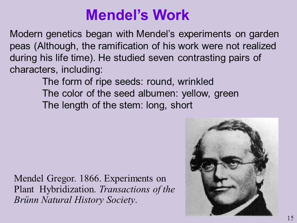 15 Modern genetics began with Mendel's experiments on garden peas (Although, the ramification of his work were not realized during his life time).