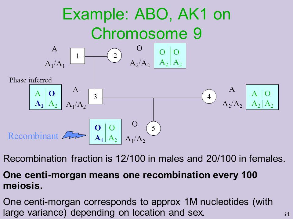 34 Example: ABO, AK1 on Chromosome 9 Recombination fraction is 12/100 in males and 20/100 in females.