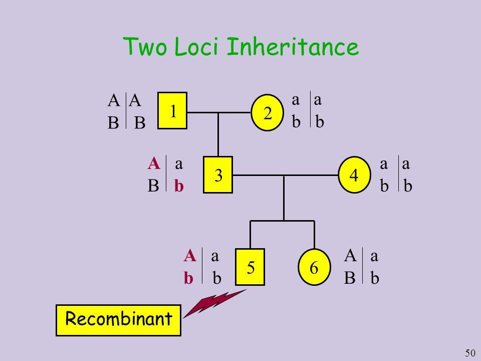 50 Two Loci Inheritance Recombinant 2 1 A B a b A a B b 34 a b A a b 56 A a B b