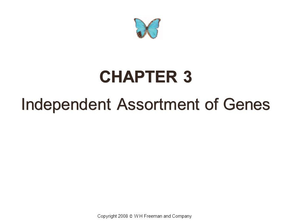 CHAPTER 3 Independent Assortment of Genes CHAPTER 3 Independent Assortment of Genes Copyright 2008 © W H Freeman and Company