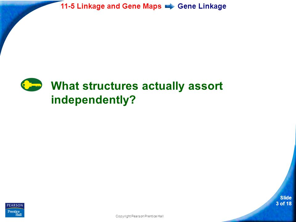 Slide 14 of 18 Copyright Pearson Prentice Hall 11-5 According to Mendel s principle of independent assortment, the factors that assort independently are the a.genes.