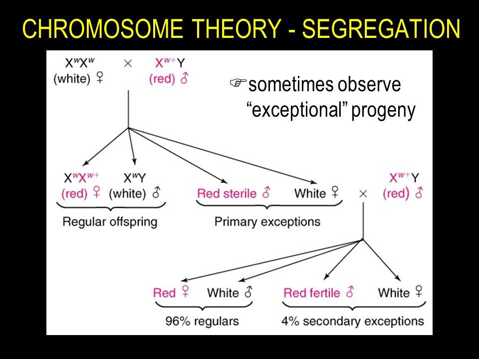 "CHROMOSOME THEORY - SEGREGATION Fsometimes observe ""exceptional"" progeny"