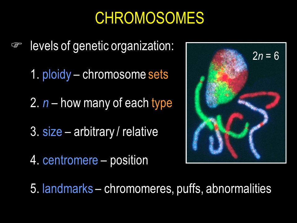 CHROMOSOMES F levels of genetic organization: 1.ploidy – chromosome sets 2.