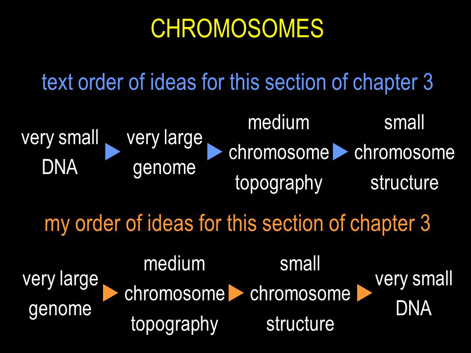 CHROMOSOMES text order of ideas for this section of chapter 3 very small DNA very large genome medium chromosome topography small chromosome structure  my order of ideas for this section of chapter 3 very small DNA very large genome medium chromosome topography small chromosome structure 