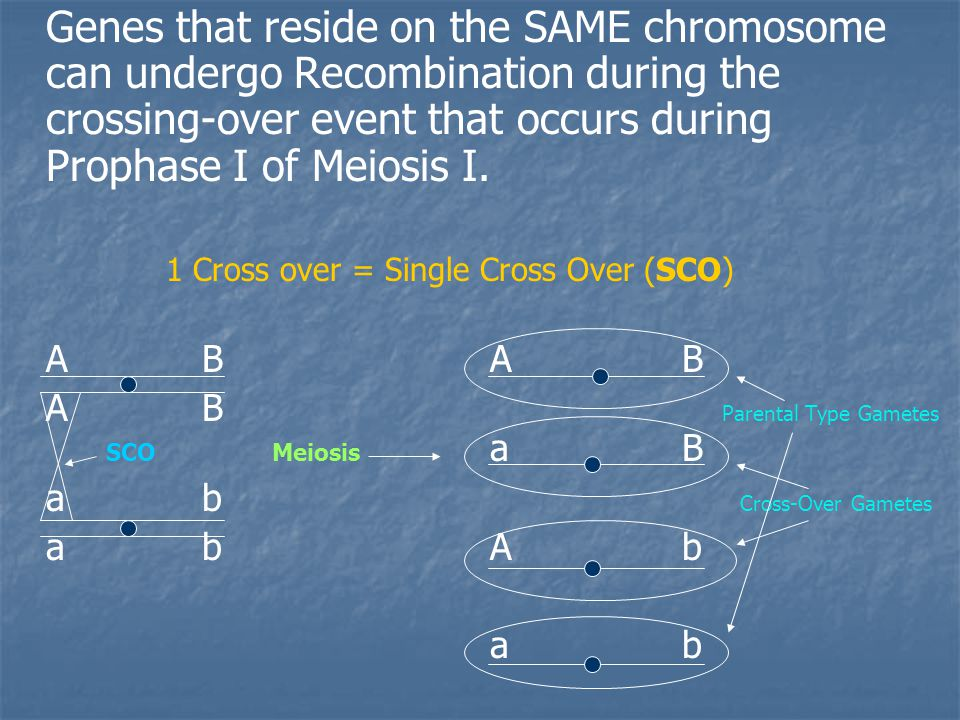 Genes that reside on the SAME chromosome can undergo Recombination during the crossing-over event that occurs during Prophase I of Meiosis I.