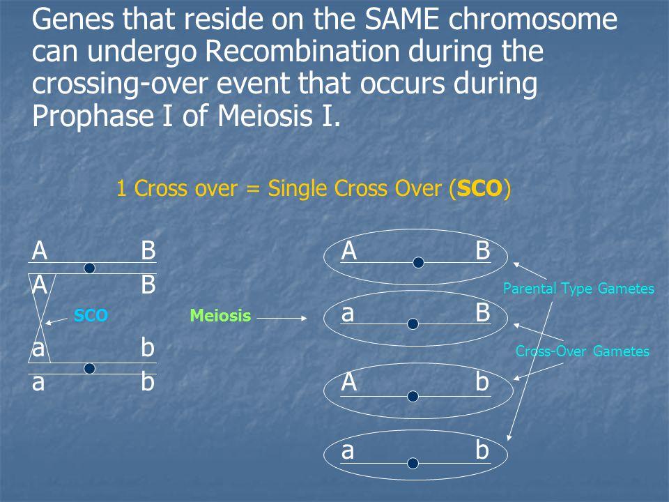 2 Cross over = Double Cross Over (DCO) ABC (Parental) A B C aBc A B C (DCO) AbCAbC DCO Meiosis Ab c (SCO 1) a b c aB C a b c ABcABc (SCO 2) abCabC abc (Parental)