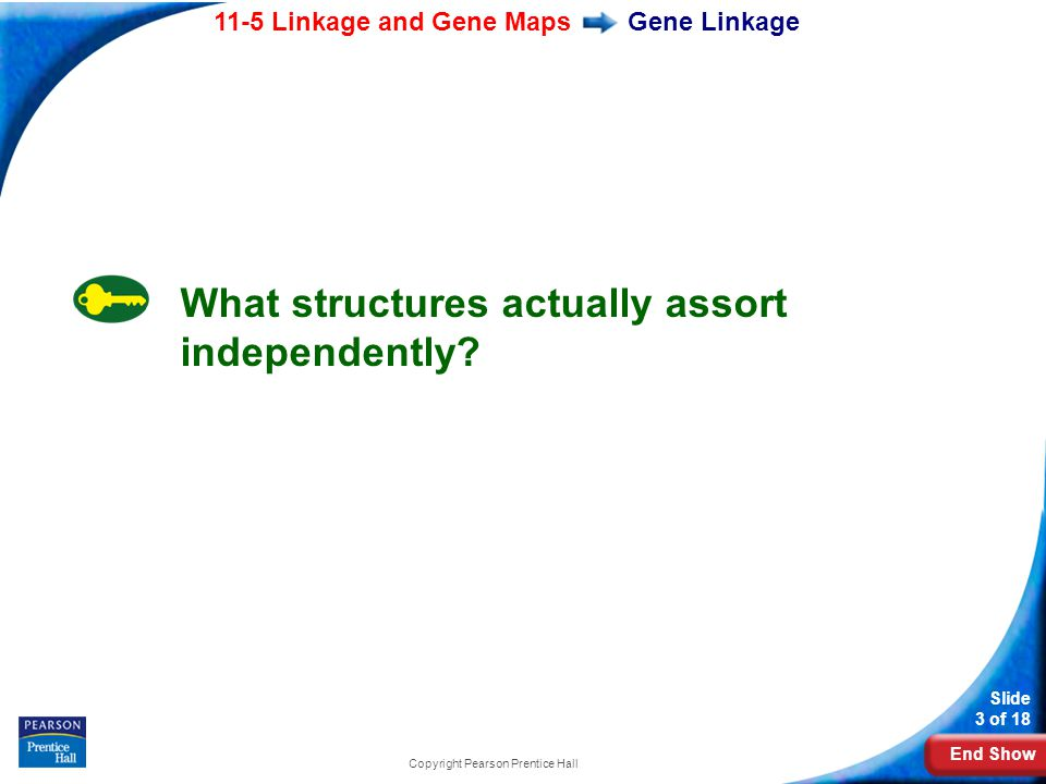 End Show 11-5 Linkage and Gene Maps Slide 3 of 18 Copyright Pearson Prentice Hall Gene Linkage What structures actually assort independently?