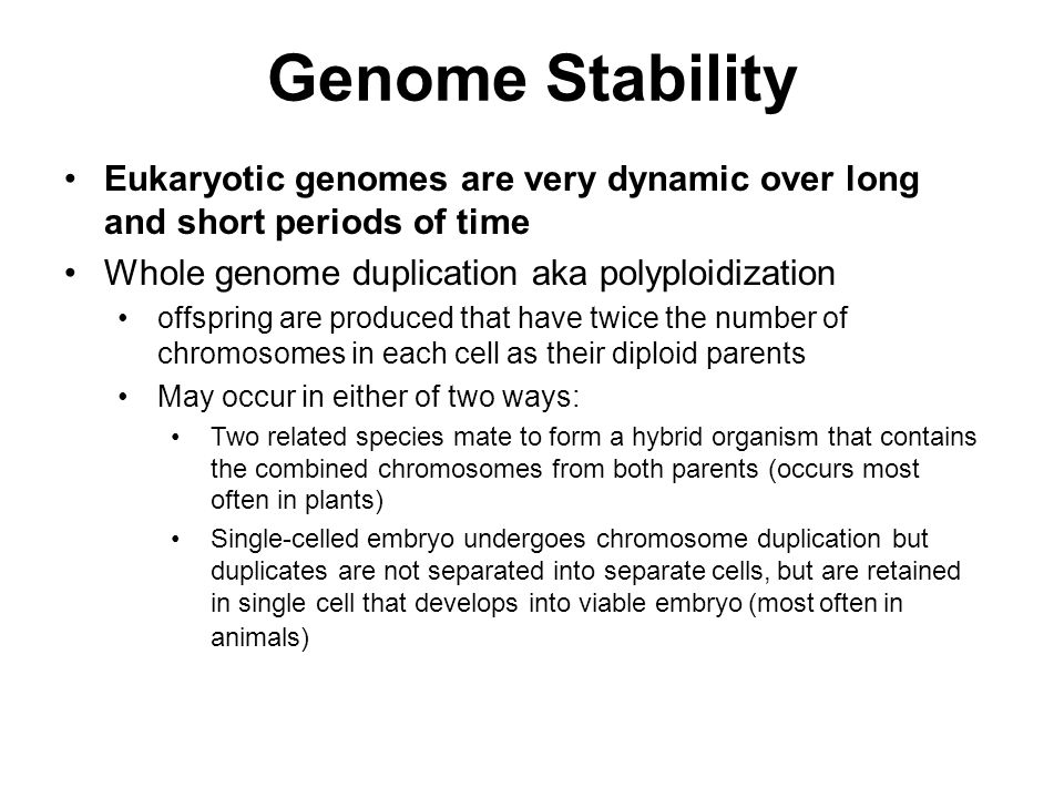 Eukaryotic genomes are very dynamic over long and short periods of time Whole genome duplication aka polyploidization offspring are produced that have