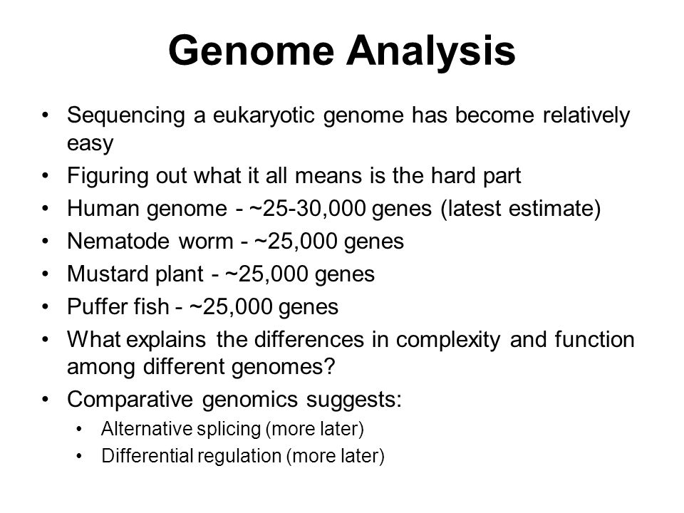 Sequencing a eukaryotic genome has become relatively easy Figuring out what it all means is the hard part Human genome - ~25-30,000 genes (latest esti