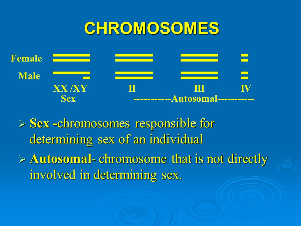CHROMOSOMES  Sex -chromosomes responsible for determining sex of an individual  Autosomal- chromosome that is not directly involved in determining s