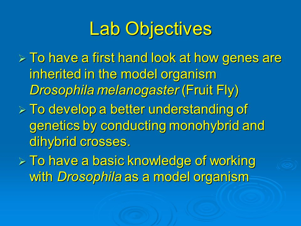 Lab Objectives  To have a first hand look at how genes are inherited in the model organism Drosophila melanogaster (Fruit Fly)  To develop a better
