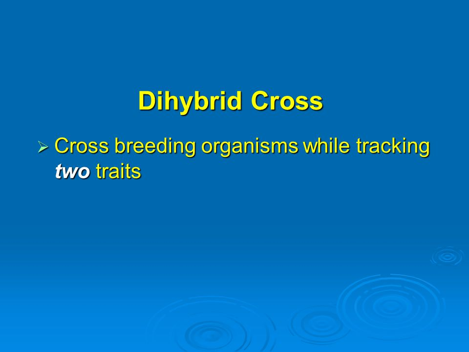 Dihybrid Cross  Cross breeding organisms while tracking two traits