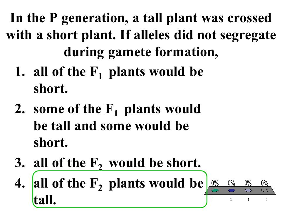 In the P generation, a tall plant was crossed with a short plant. If alleles did not segregate during gamete formation, 1.all of the F 1 plants would