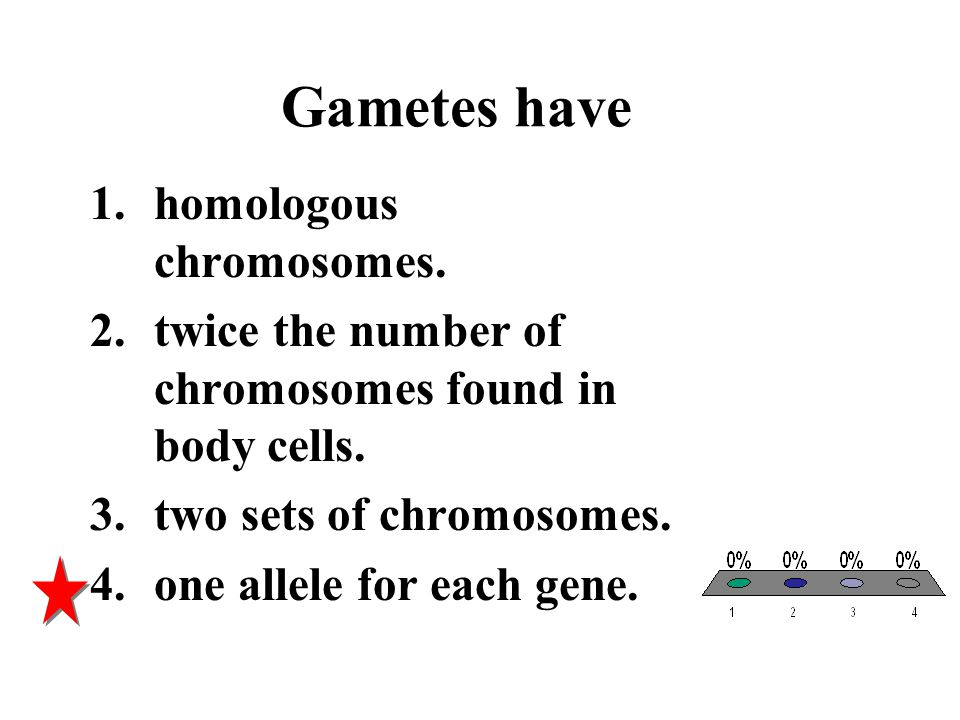 Gametes have 1.homologous chromosomes. 2.twice the number of chromosomes found in body cells. 3.two sets of chromosomes. 4.one allele for each gene.