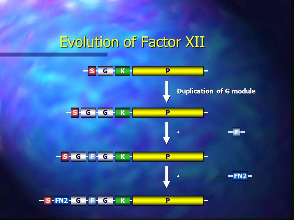 Evolution of Factor XII PSGKPSGKG F PSGKGF FN2 PSGKGF Duplication of G module
