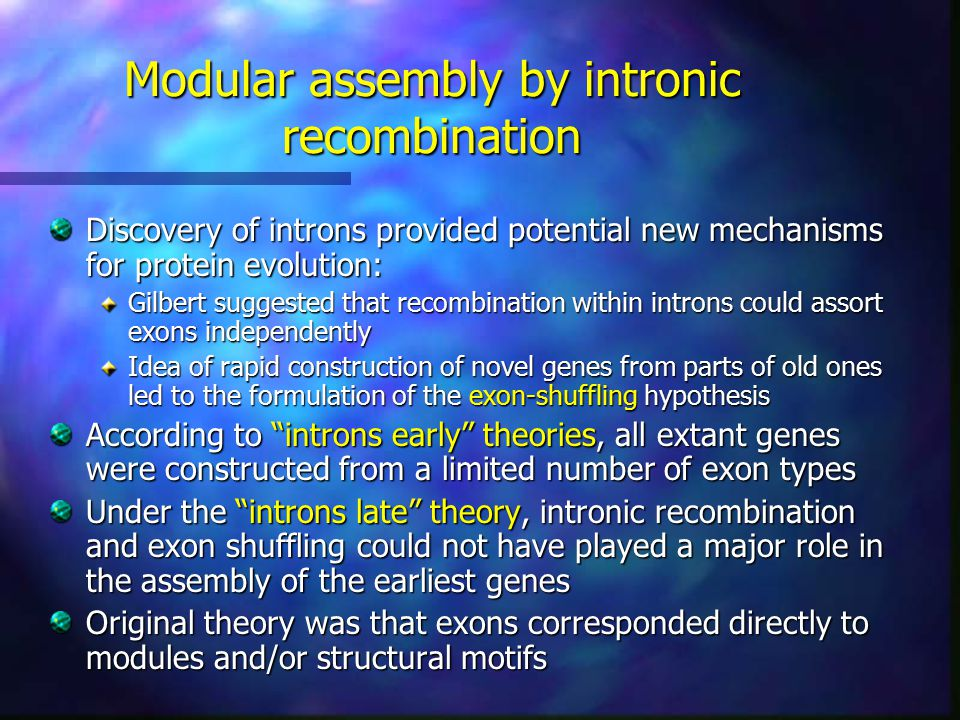 Modular assembly by intronic recombination Discovery of introns provided potential new mechanisms for protein evolution: Gilbert suggested that recombination within introns could assort exons independently Idea of rapid construction of novel genes from parts of old ones led to the formulation of the exon-shuffling hypothesis According to introns early theories, all extant genes were constructed from a limited number of exon types Under the introns late theory, intronic recombination and exon shuffling could not have played a major role in the assembly of the earliest genes Original theory was that exons corresponded directly to modules and/or structural motifs