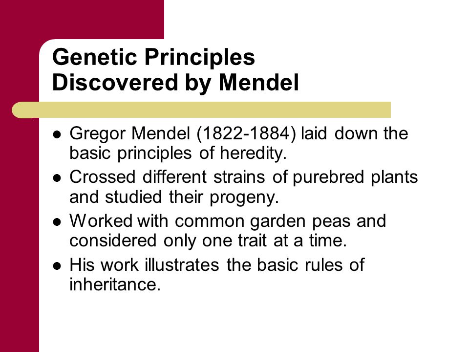 Genetic Principles Discovered by Mendel Gregor Mendel (1822-1884) laid down the basic principles of heredity. Crossed different strains of purebred pl