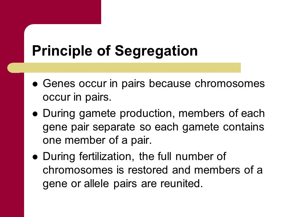 Principle of Segregation Genes occur in pairs because chromosomes occur in pairs. During gamete production, members of each gene pair separate so each