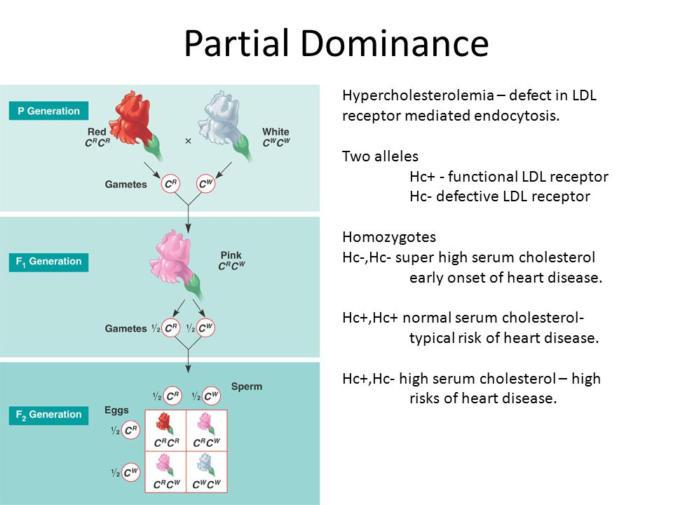 Partial Dominance Hypercholesterolemia – defect in LDL receptor mediated endocytosis. Two alleles Hc+ - functional LDL receptor Hc- defective LDL rece