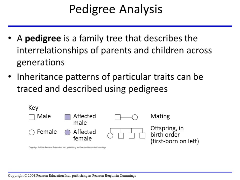 Pedigree Analysis A pedigree is a family tree that describes the interrelationships of parents and children across generations Inheritance patterns of