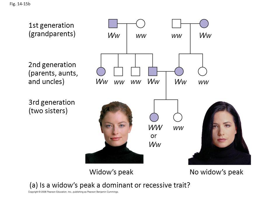 Fig. 14-15b 1st generation (grandparents) 2nd generation (parents, aunts, and uncles) 3rd generation (two sisters) Widow's peakNo widow's peak (a) Is