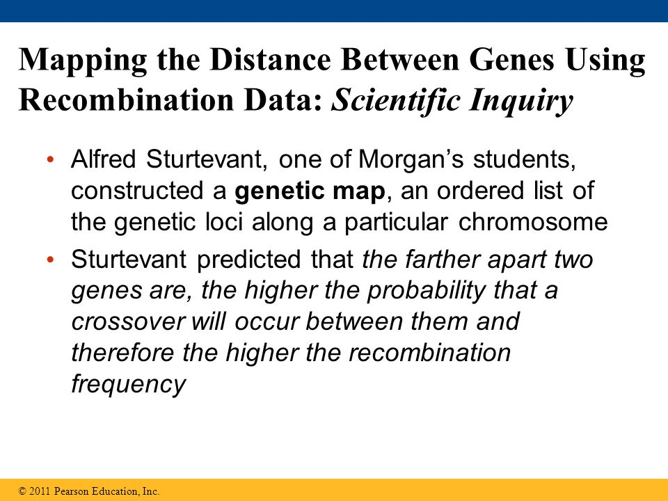 Mapping the Distance Between Genes Using Recombination Data: Scientific Inquiry Alfred Sturtevant, one of Morgan's students, constructed a genetic map, an ordered list of the genetic loci along a particular chromosome Sturtevant predicted that the farther apart two genes are, the higher the probability that a crossover will occur between them and therefore the higher the recombination frequency © 2011 Pearson Education, Inc.