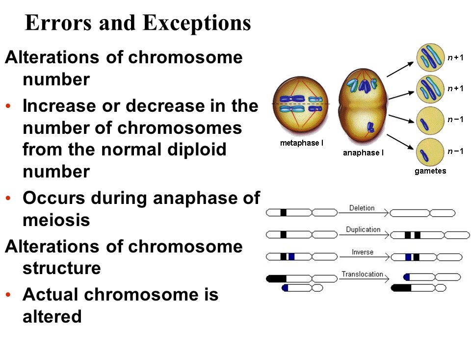 Errors and Exceptions Alterations of chromosome number Increase or decrease in the number of chromosomes from the normal diploid number Occurs during anaphase of meiosis Alterations of chromosome structure Actual chromosome is altered