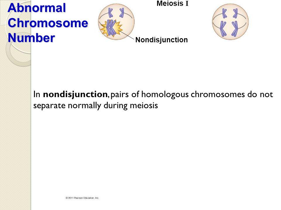 Meiosis I Nondisjunction Abnormal Chromosome Number In nondisjunction, pairs of homologous chromosomes do not separate normally during meiosis
