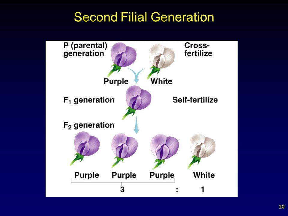 10 Second Filial Generation
