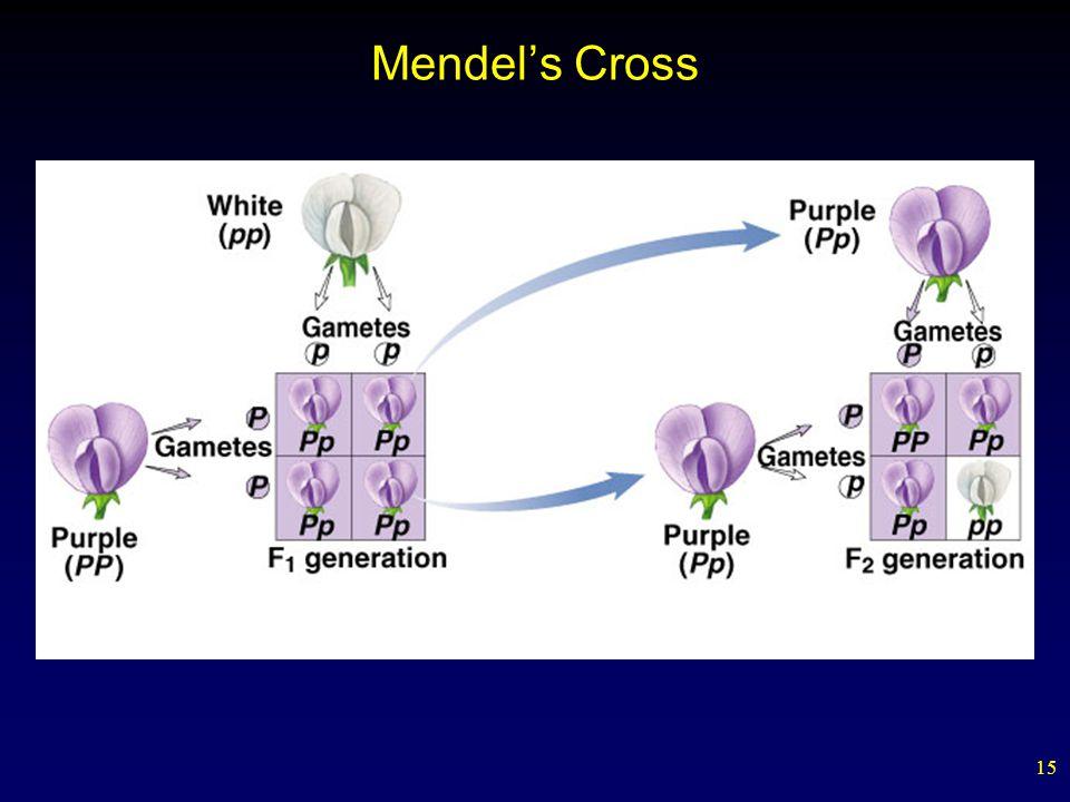 15 Mendel's Cross
