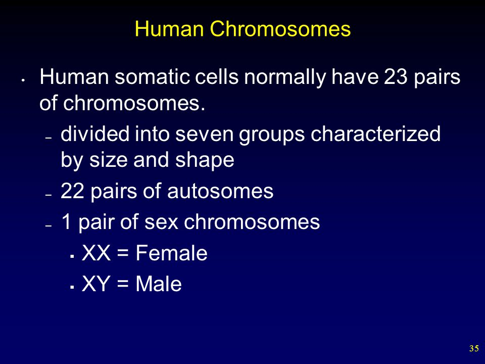 35 Human Chromosomes Human somatic cells normally have 23 pairs of chromosomes. – divided into seven groups characterized by size and shape – 22 pairs