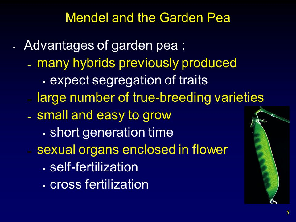 5 Mendel and the Garden Pea Advantages of garden pea : – many hybrids previously produced  expect segregation of traits – large number of true-breedi