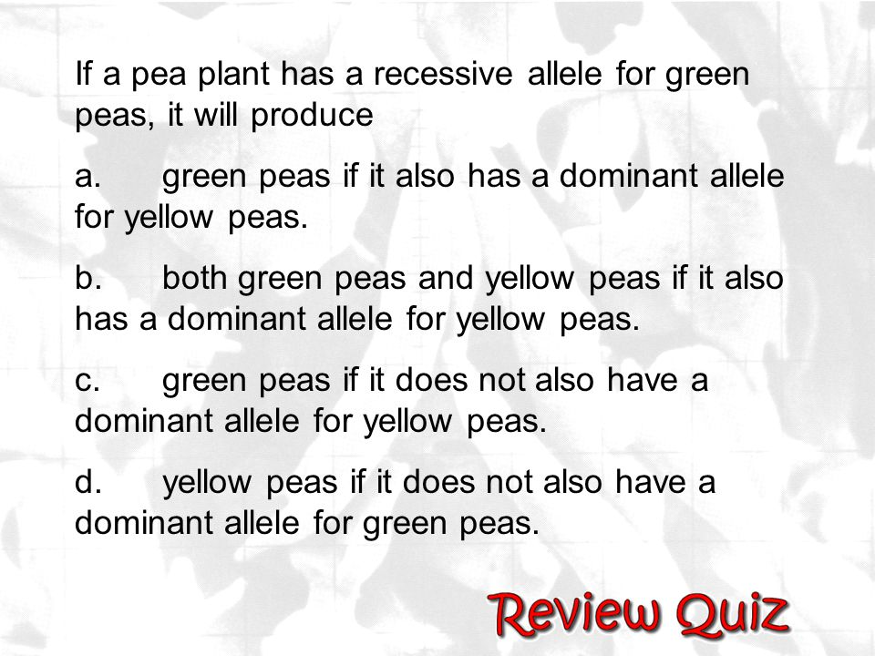 If a pea plant has a recessive allele for green peas, it will produce a.green peas if it also has a dominant allele for yellow peas. b.both green peas