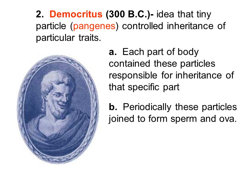 2. Democritus (300 B.C.)- idea that tiny particle (pangenes) controlled inheritance of particular traits. a. Each part of body contained these particl