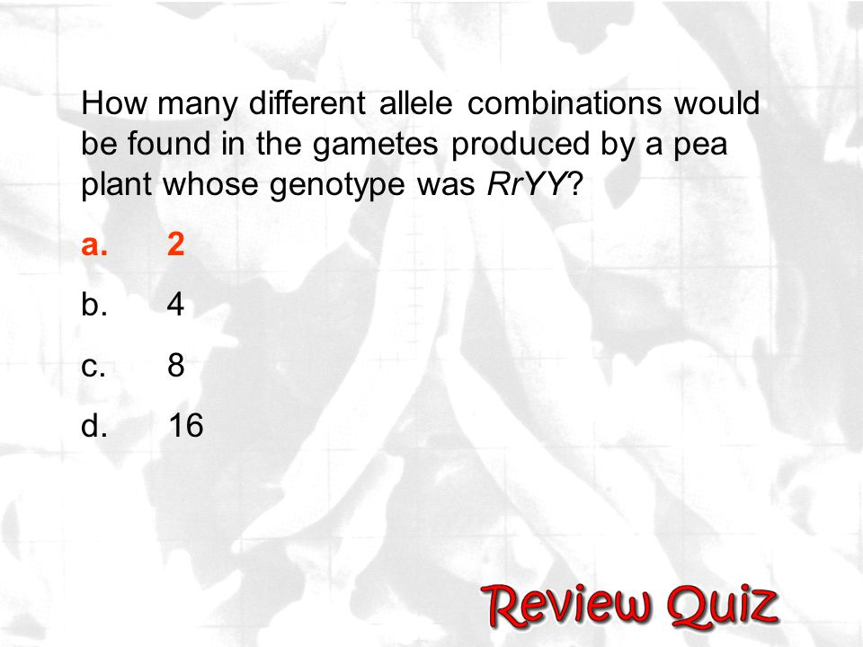 How many different allele combinations would be found in the gametes produced by a pea plant whose genotype was RrYY? a.2 b.4 c.8 d.16
