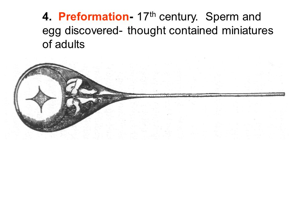 4. Preformation- 17 th century. Sperm and egg discovered- thought contained miniatures of adults