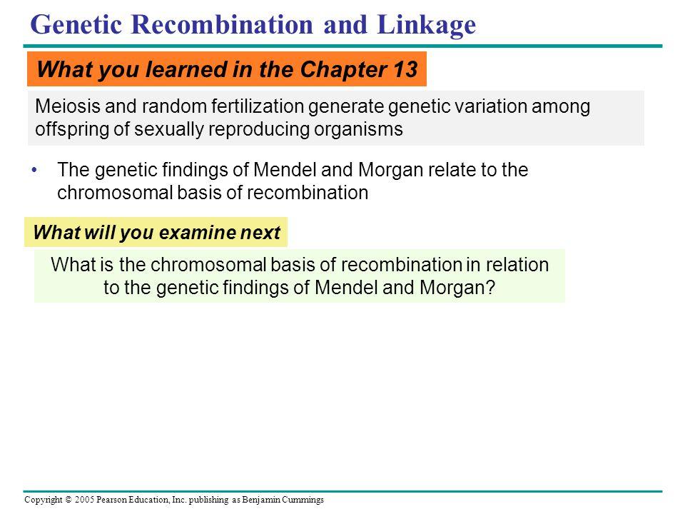 Copyright © 2005 Pearson Education, Inc. publishing as Benjamin Cummings Genetic Recombination and Linkage Meiosis and random fertilization generate g