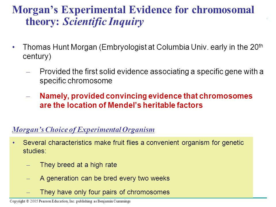 Copyright © 2005 Pearson Education, Inc. publishing as Benjamin Cummings Morgan's Experimental Evidence for chromosomal theory: Scientific Inquiry Tho