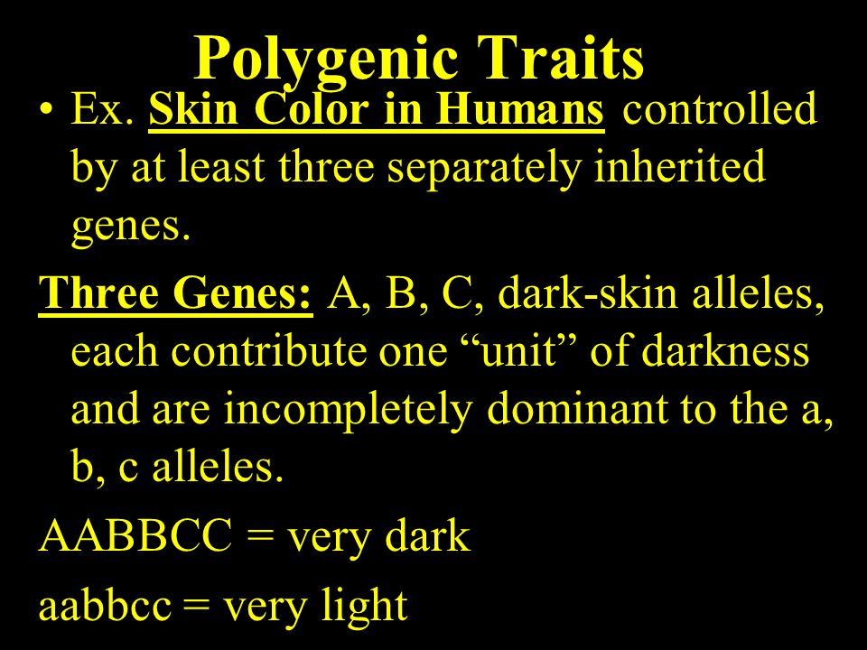 Polygenic Traits Ex. Skin Color in Humans controlled by at least three separately inherited genes.
