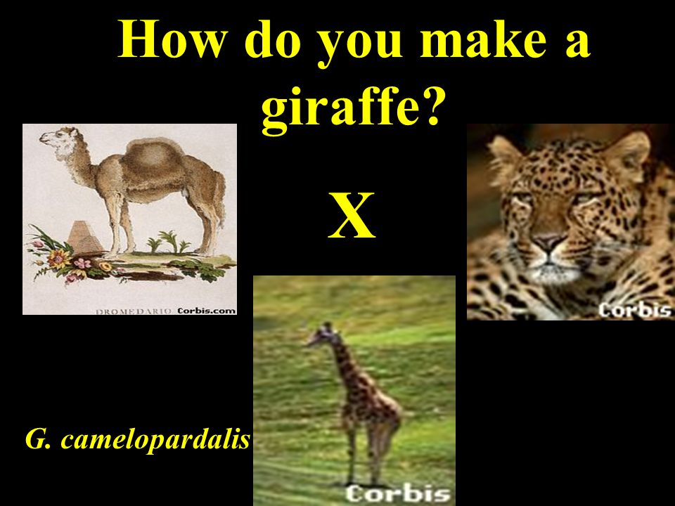 Early Ideas of Genetics Saw patterns of inheritance in people and domesticated plants and animals.