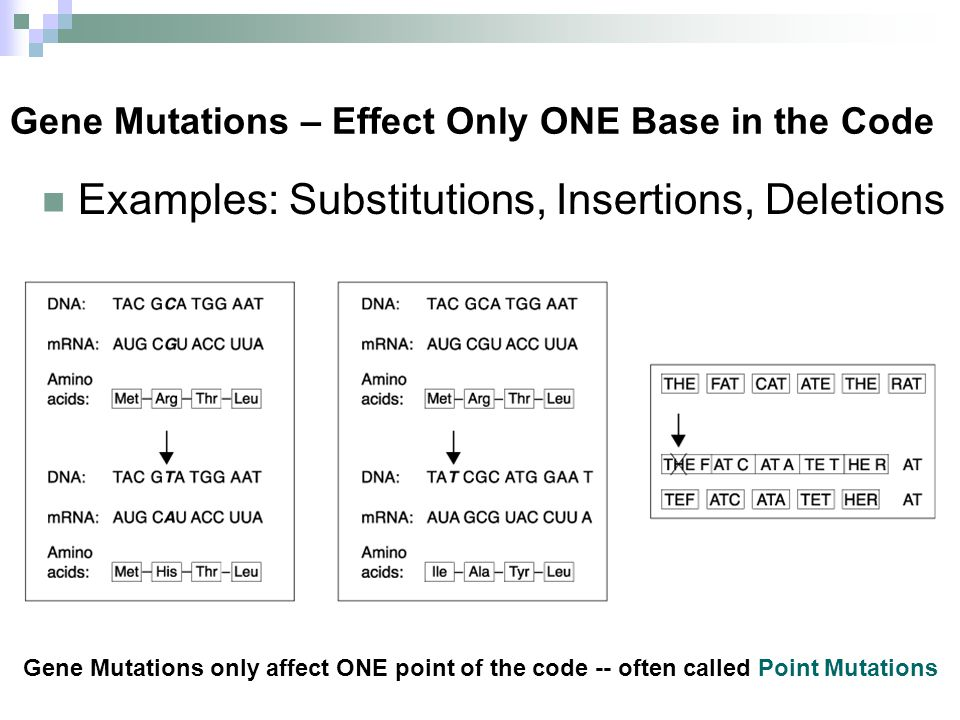 Gene Mutations – Effect Only ONE Base in the Code Examples: Substitutions, Insertions, Deletions Gene Mutations only affect ONE point of the code -- o